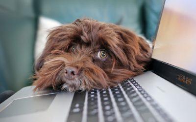5 istotnych rzeczy, które musisz wiedzieć, zanim założysz własną stronę internetową